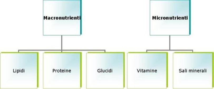 Schema di classificazione dei costituenti principali degli alimenti