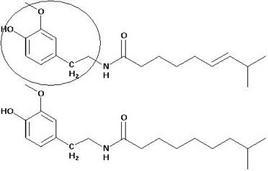 Strutture della capsaicina e della diidrocapsaicina