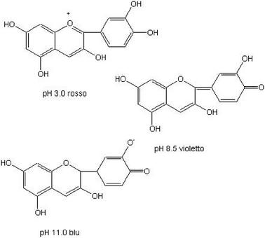 Stutture assunte dalla cianidina a diversi valori di pH