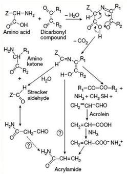 Formazione di acrilamide
