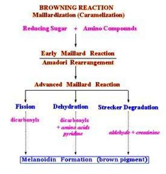 Schema riassuntivo della reazione di Maillard