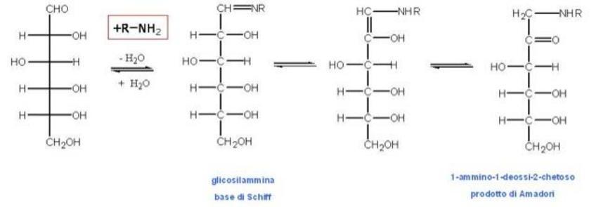 Formazione del prodotto di Amadori nelle prime fasi della reazione di Maillard
