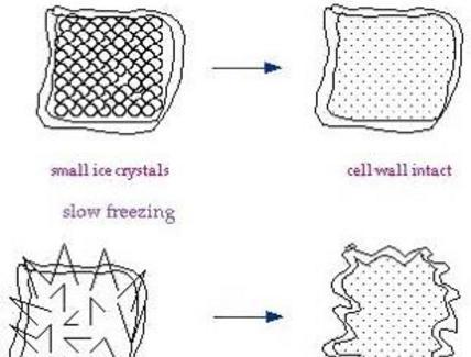 Formazione di cristalli nel processo di congelamento