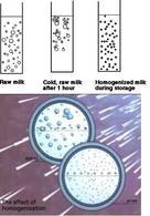 Effetto dell'omogeneizzazione sui globuli di grasso