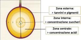 Composizione dei diversi strati della polpa