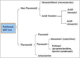 Schema delle diverse classi di polifenoli presenti nell'uva