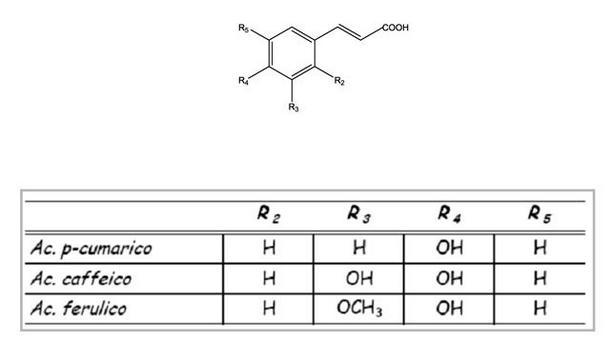 Schema delle strutture dei diversi acidi cinnamici presenti nell'uva