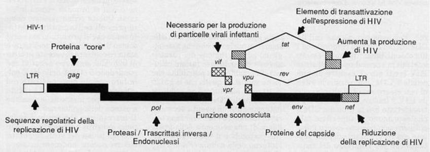 Genoma di HIV