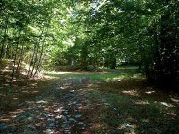 Il sentiero nella radura