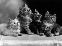 Gatti (specie)