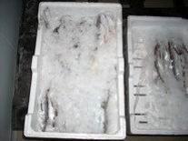 Esempi di prodotti della pesca sotto ghiaccio