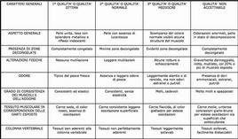 Schema per la classificazione del tonno in diversi gradi di qualità.