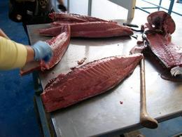 Fase della preparazione di filetti di tonno.