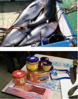 """In alto: Esemplari appena catturati di """"Thunnus thynnus"""". In basso: Confezioni di tonno in scatola."""