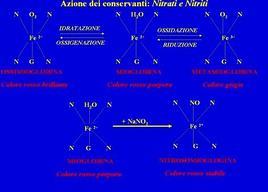 Meccanismo di azione di Nitrati e Nitriti.