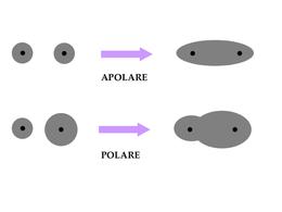Tipi di legame covalente