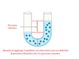 Rappresentazione della pressione osmotica