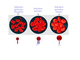 Plasmolisi ed emolisi