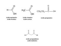 Strutture di acidi alifatici mono e bicarbossilici