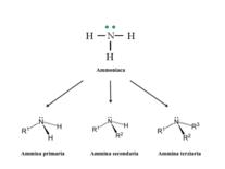 Formazione delle ammine a partire dall'ammoniaca