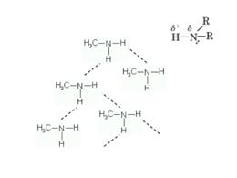 Formazione del legame a idrogeno tra molecole di ammina primaria. In alto a destra è mostrata la polarizzazione del legame N-H (ammina secondaria).