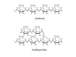 Struttura dell'amilosio e dell'amilopectina