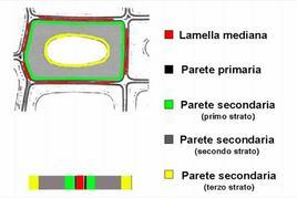Rappresentazione schematica degli strati di cui è costituita la parete