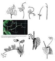 Esempi di cirrazione di foglie o parti di foglie