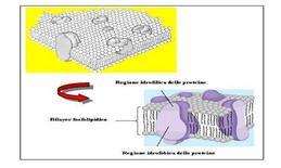 Modello di membrana secondo Singer e Nicolson