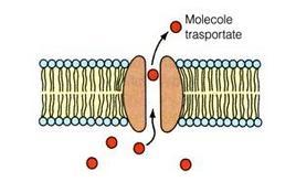 Pori di membrana