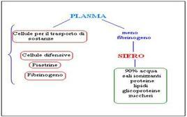 Plasma e siero
