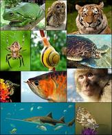 Differenti specie animali. Fonte: Wikipedia.
