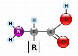 Struttura generica di un aminoacido. R rappresenta un gruppo laterale specifico di ogni aminoacido.Fonte: Wikipedia.