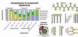 Composizione di lipoproteine.Fonte: Wikipedia.