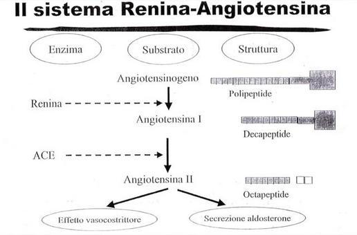 Schema di azione del sistema renina-angiotensina-aldosterone.