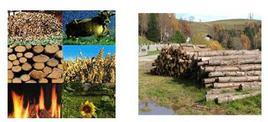 Esempi di biomasse