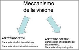 Il meccanismo della visione coinvolge aspetti oggettivi e soggettivi