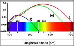 Sensibilità spettrale dei tre tipi di coni