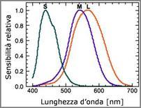 Sensibilità  spettrale relativa dei tre tipi di coni