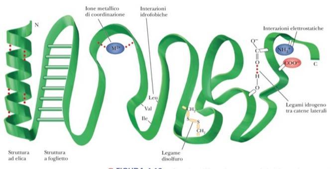 Fig. 1.11: forze che stabilizzano la struttura terziariata
