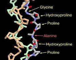 Fig. 1.7: struttura del collagene (unità tripeptidica ripetuta)