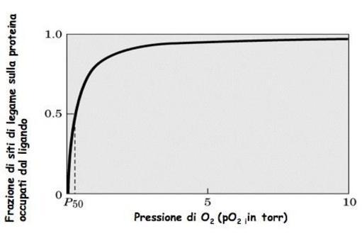 Fig. 2.6: curva di legame dell'ossigeno alla mioglobina