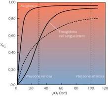 Fig. 2.10: l'emoglobina lega l'ossigeno in modo cooperativo