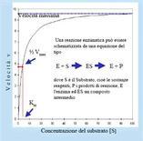 Effetto dell'aumento della concentrazione del substrato sulla velocità di una reazione catalizzata