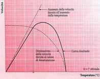 Effetto dell'aumento della temperatura sulla velocità di una reazione catalizzata