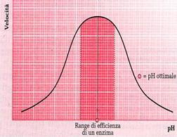 Effetto della variazione (aumento) del pH sulla velocità di una reazione catalizzata