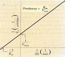 Termini Vmax e Km nel grafico dei DOPPI RECIPROCI (equazione di Lineweaver – Burk)