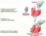 Fig. 1: Linibitore non competitivo si lega in un sito diverso dal sito attivo