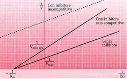 Fig. 2: nel grafico dei DOPPI RECIPROCI diminuisce la Vmax il Km non varia