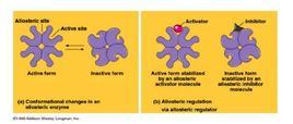 a) cambi conformazionali in un enzima allosterico; b) regolazione allosterica attraverso un regolatore attivatore/o inibitore